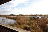 [A view from a hide at Shapwick Heath reserve, Somerset Levels]