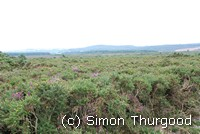 [Overlooking the heathland]